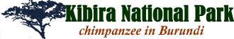 Kibira National Park Burundi