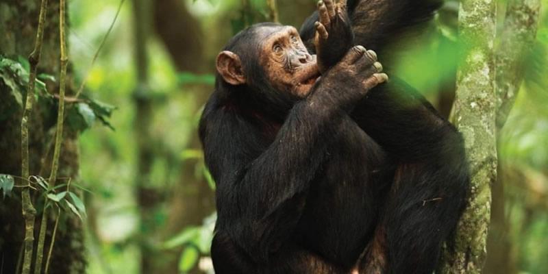 Kibira National park in Burundi