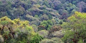 Vegetation at Kibira National Park Burundi